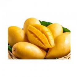 Mango Chancleton