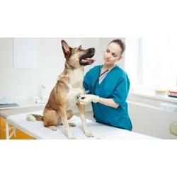 Seguro de asistencia veterinaria